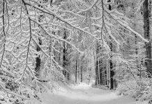Doi tineri rătăciți în pădurile din Voineasa, găsiți de jandarmii vâlceni