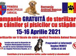 Campanie de sterilizare GRATUITA a cainilor si pisicilor cu stapani din Caracal